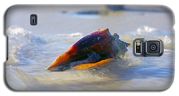 Fighting Conch On Beach Galaxy S5 Case