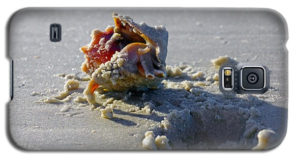 Fighting Conch On The Beach Galaxy S5 Case by Robb Stan