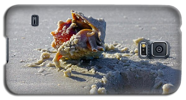 Fighting Conch On The Beach Galaxy S5 Case