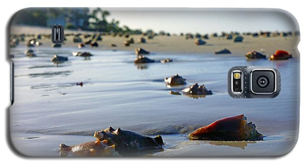 Fighting Conchs On The Beach In Naples, Fl Galaxy S5 Case