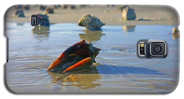 Fighting Conchs On The Sandbar Galaxy S5 Case