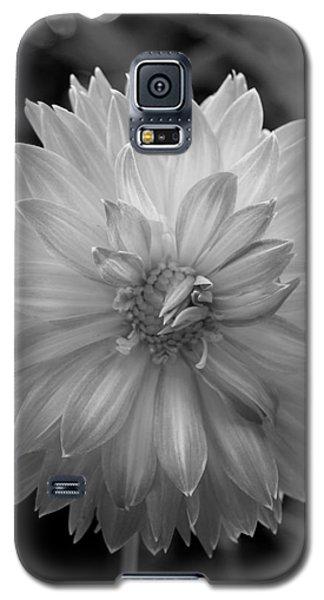 Filter Series 100 Galaxy S5 Case