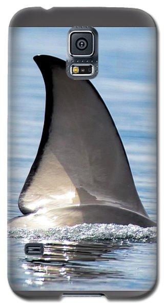 Fin Galaxy S5 Case