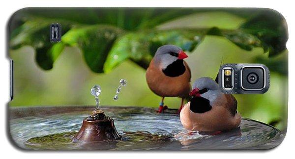 Finch Bath  Galaxy S5 Case