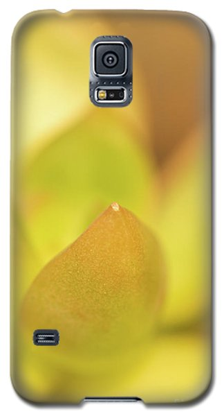 Galaxy S5 Case featuring the photograph Find Focus In Nature by Ana V Ramirez