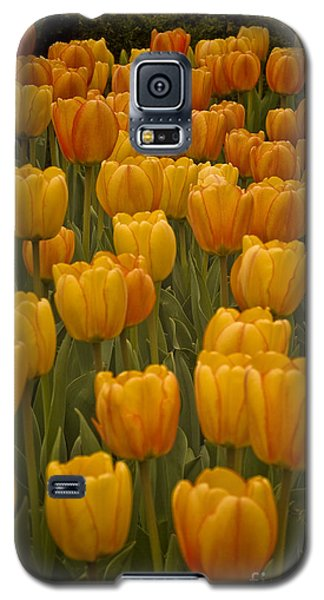 Fine Lines In Yellow Tulips Galaxy S5 Case by Michael Flood