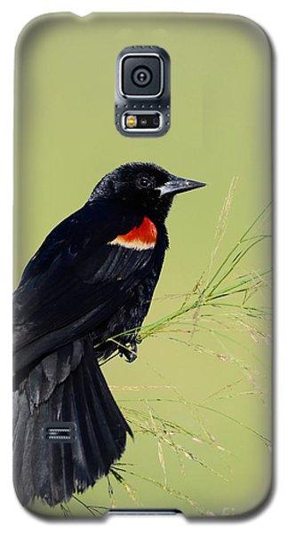 Fine Perch Galaxy S5 Case