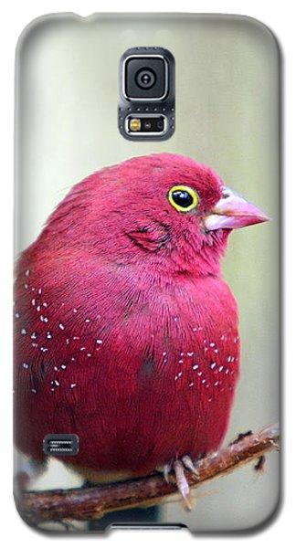 Fire Finch Galaxy S5 Case by Marion Cullen