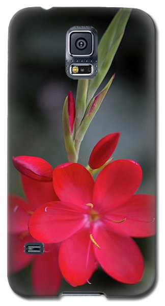 Fire Lily 2 Galaxy S5 Case
