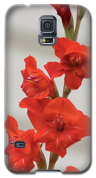 Galaxy S5 Case featuring the photograph Fire Red Gladiolas by Angie Vogel