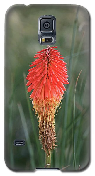 Galaxy S5 Case featuring the photograph Firecracker by David Chandler