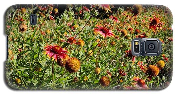 Firewheel Wildflower Galaxy S5 Case