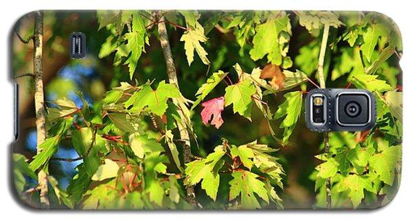 First Leaf Galaxy S5 Case