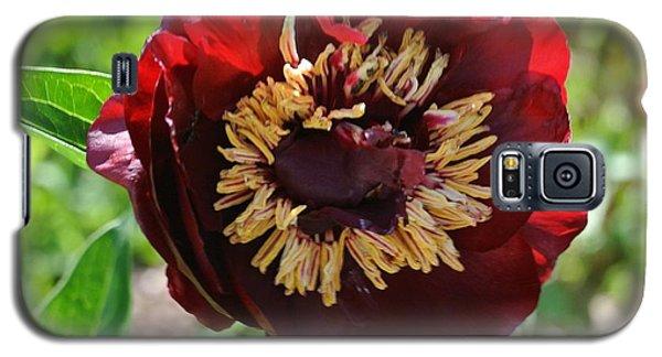 First Peony Bloom Galaxy S5 Case by Marsha Heiken
