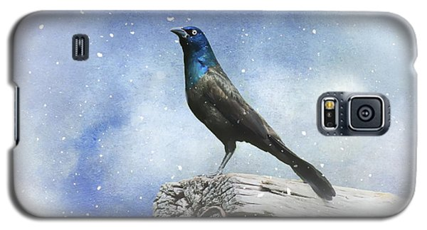 First Snow And Common Grackle Galaxy S5 Case