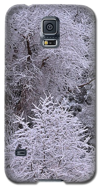 First Snow I Galaxy S5 Case