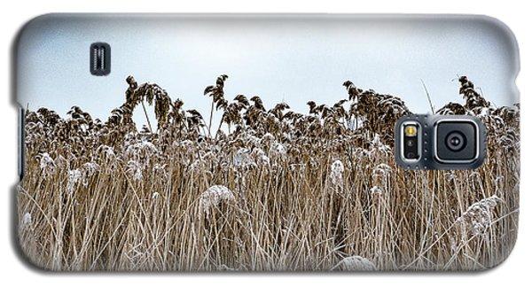 First Snow On Roman Reed Galaxy S5 Case