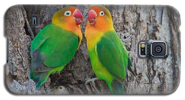Lovebird Galaxy S5 Case - Fischers Lovebird Agapornis Fischeri by Panoramic Images