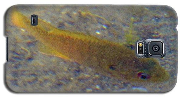 Fish Sandy Bottom Galaxy S5 Case