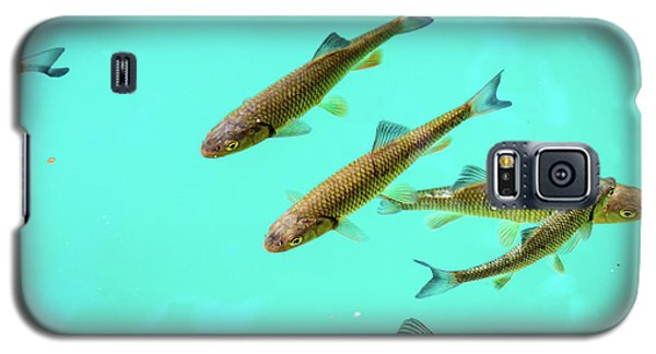 Fish School In Turquoise Lake - Plitvice Lakes National Park, Croatia Galaxy S5 Case