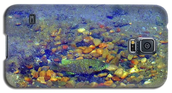 Galaxy S5 Case featuring the photograph Fish Spawning by Rockin Docks Deluxephotos