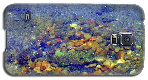 Fish Spawning Galaxy S5 Case
