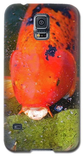 Fish Surprise Galaxy S5 Case