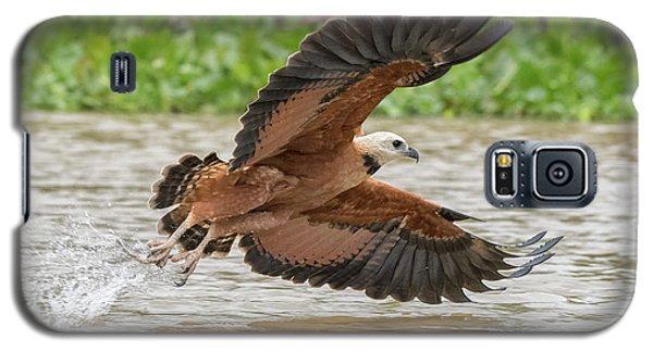 Fishing Hawk Galaxy S5 Case by Wade Aiken
