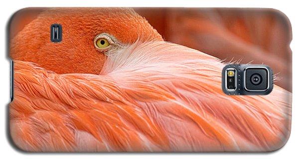 Flamboyant Flamingo Galaxy S5 Case