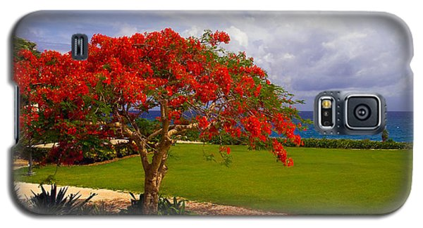 Flamboyant Tree In Grand Cayman Galaxy S5 Case by Marie Hicks