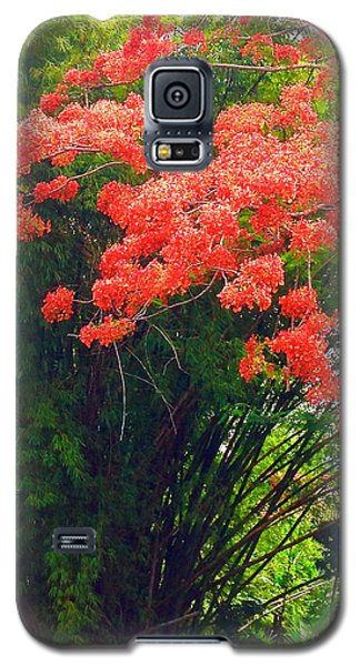 Flamboyant With Bamboo Galaxy S5 Case