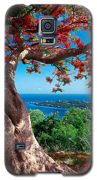 Flame Tree St Thomas Galaxy S5 Case