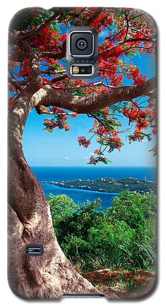 Flame Tree St Thomas Galaxy S5 Case