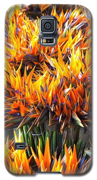 Galaxy S5 Case featuring the photograph Flamin' Birds by John  Bartosik
