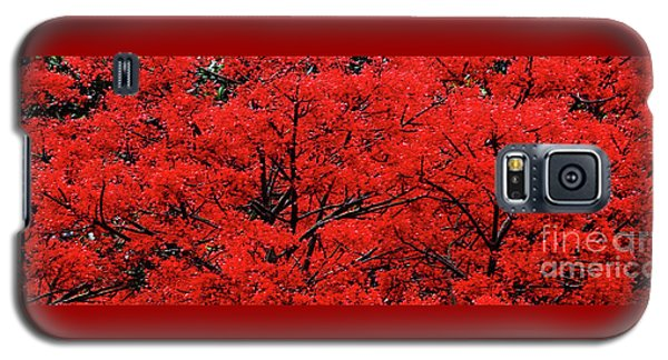 Galaxy S5 Case featuring the photograph Flaming Red Panorama II By Kaye Menner by Kaye Menner