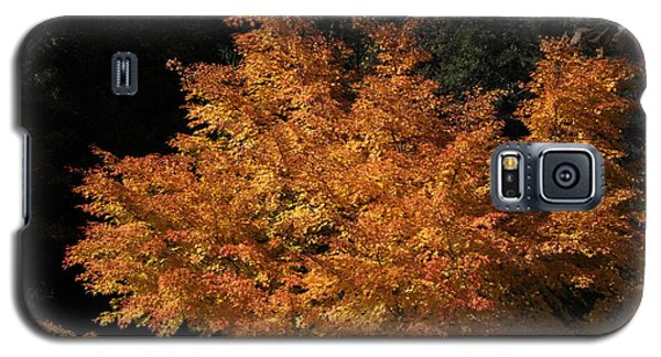 Galaxy S5 Case featuring the photograph Flaming Tree Brush by Deborah  Crew-Johnson