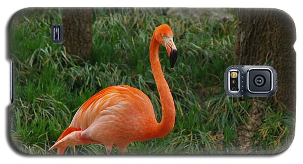 Flamingo 1 Galaxy S5 Case by Robyn Stacey