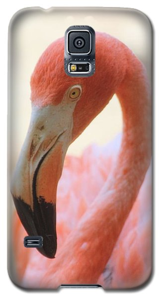 Galaxy S5 Case featuring the photograph Flamingo 2 by Elizabeth Budd