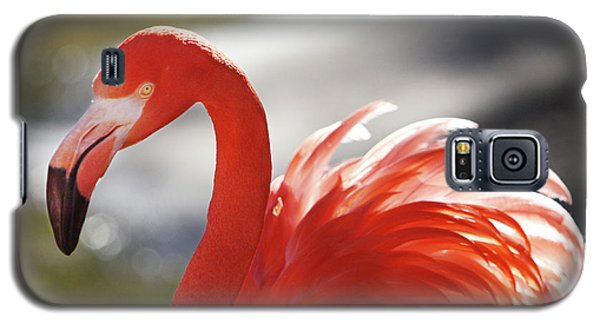 Galaxy S5 Case featuring the photograph Flamingo 2 by Marie Leslie