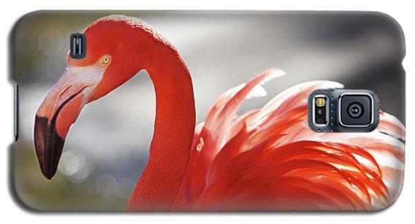Flamingo 2 Galaxy S5 Case