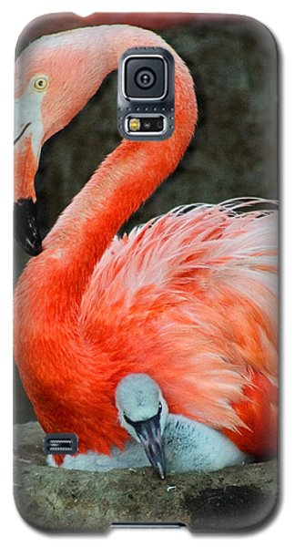 Flamingo And Baby Galaxy S5 Case