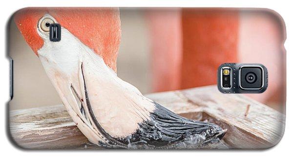 Galaxy S5 Case featuring the photograph Flamingo At Sea World In Orlando Florida by Peter Ciro