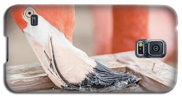 Flamingo At Sea World In Orlando Florida Galaxy S5 Case by Peter Ciro