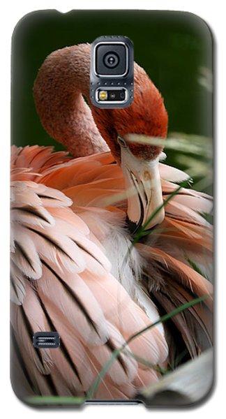 Flamingo Boudoir Galaxy S5 Case