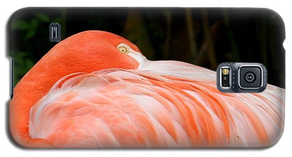 Galaxy S5 Case featuring the photograph Flaming O by Cathy Harper
