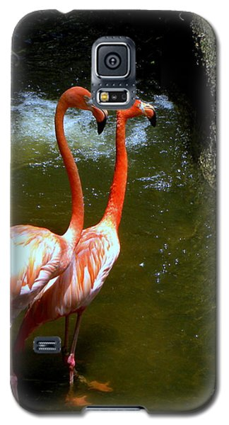 Flamingo Pair Galaxy S5 Case