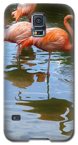 Galaxy S5 Case featuring the photograph Flamingo Reflections by Margaret Bobb