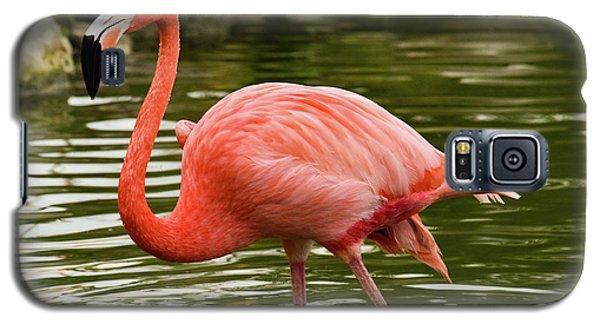 Flamingo Wades Galaxy S5 Case