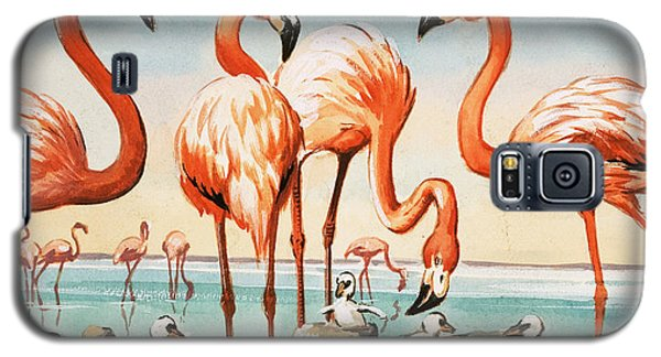 Flamingoes Galaxy S5 Case by English School