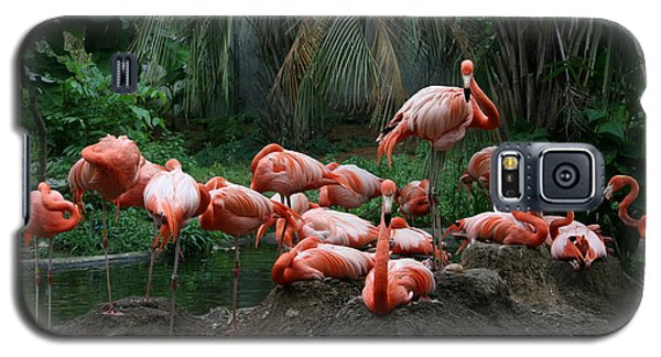 Galaxy S5 Case featuring the photograph Flamingos by Cathy Harper